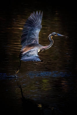 Photograph - Cleared For Take Off by Cyndy Doty