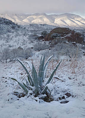 Photograph - Clearing Desert Snowstorm by Tom Daniel