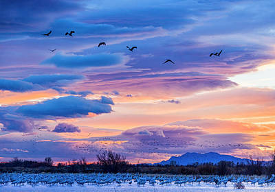 Photograph - Clearing Storm And Sandhill Cranes Near Bosque Del Apache Nm by Joe Doherty