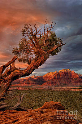 Photograph - Clearing Storm And West Temple South Of Zion National Park by Dave Welling