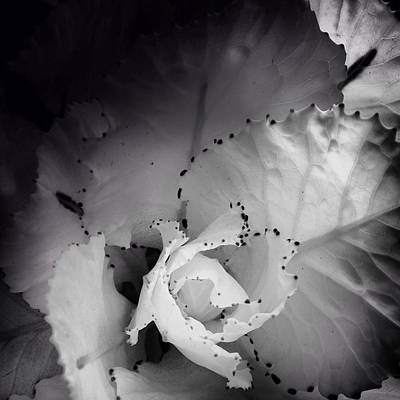 Photograph - Clearly Bloomed by Kathleen Messmer