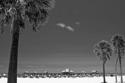 Tree Photograph - Clearwater Beach Bw by Adam Romanowicz