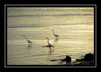 Photograph - Clearwater Beach by Carolyn Marshall