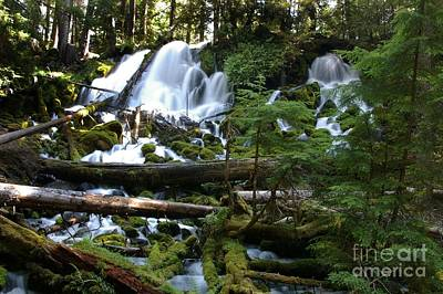 Photograph - Clearwater Falls by Rick Bures