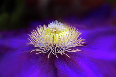 Macro Digital Art - Clematis Aglow by Jessica Jenney