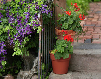 Photograph - Clematis And Geranium by Tim Fitzharris