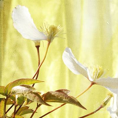 Clematis And Sunshine Art Print