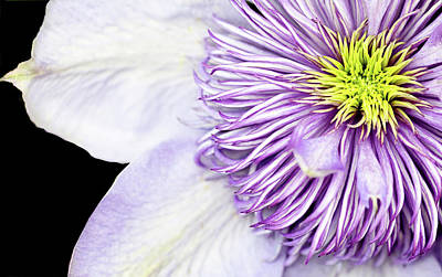 Photograph - Clematis Center by Rebecca Cozart