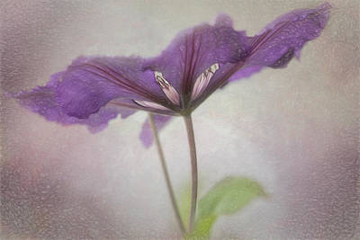 Photograph - Clematis Eyes by Jacqui Boonstra