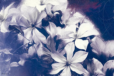 Photograph - Clematis Grunge by Anna Louise