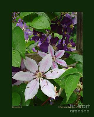 Photograph - Clematis-ii by Patricia Overmoyer