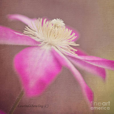 Photograph - Clematis In Square Format by Laurinda Bowling