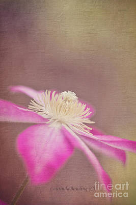 Photograph - Clematis by Laurinda Bowling