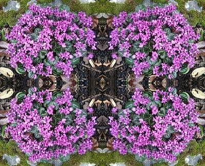 Photograph - Clematis Mandala 1 by Julia Woodman