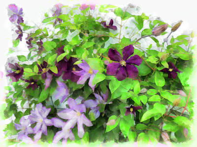 Digital Art - Clematis Mix by Leslie Montgomery
