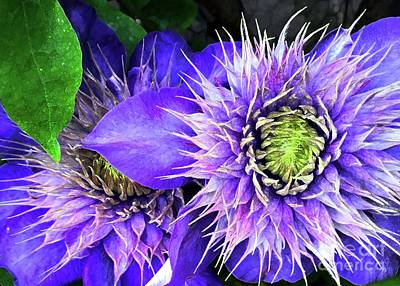 Photograph - Clematis Multi Blue by Barbie Corbett-Newmin