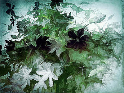 Photograph - Clematis On The Vine by Leslie Montgomery