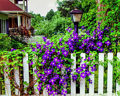 Photograph - Clematis On White Picket Fence by Tom Brickhouse
