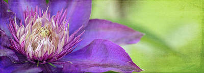 Photograph - Clematis by Rebecca Cozart