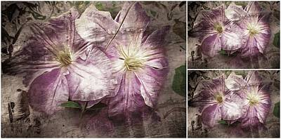 Photograph - Vintage Victorian Clematis Collage by Dorothy Berry-Lound