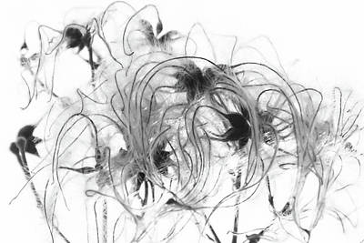 Photograph - Clematis Seeds by Wendy Cooper