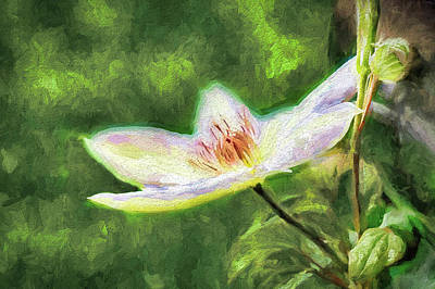 Photograph - Clematis Study by Ches Black