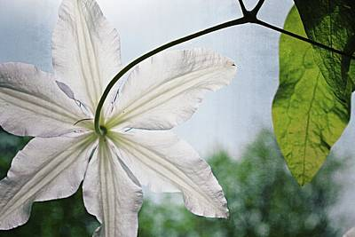 Art Print featuring the photograph Clematis Vine And Leaves by Michelle Calkins