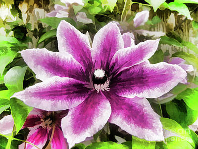 Photograph - Clematis Watercolor by Jim And Emily Bush
