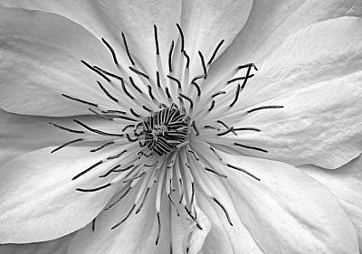 Photograph - Clematis White by Debbie Oppermann