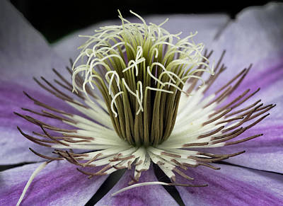 Photograph - Clematis World by Michael Friedman