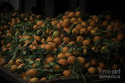 Agadir Photograph - Clementine by Daniel Berube