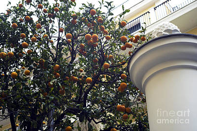 Clementine Tree In Sorrento Print by John Rizzuto