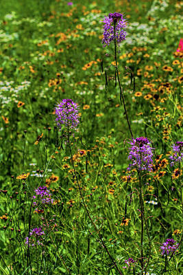 Photograph - Cleome And Coreopsis by Alana Thrower