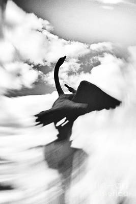 Photograph - Swans In Love by Svetlana Batalina