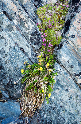 Photograph - Cliff Crevice Garden by Tim Newton
