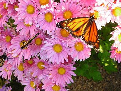 Cliff House Butterflies Art Print by Heather Weikel