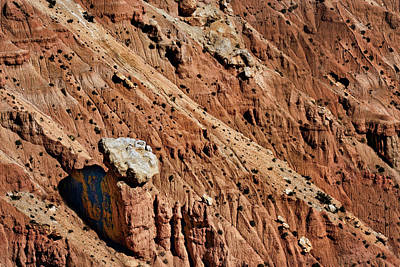 Photograph - Cliffhanger - Bryce Canyon - National Park by Nikolyn McDonald