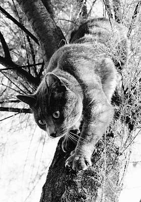 Photograph - Climbing Down To Say Hello by Colleen Williams
