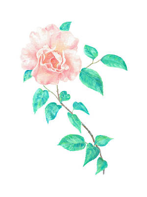 Painting - Climbing Rose by Elizabeth Lock