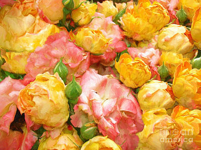 Photograph - Climbing Rose Flower Background by Vizual Studio