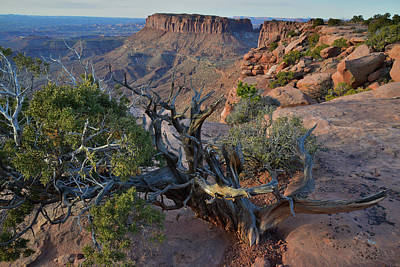 Photograph - Clinging To The Ledge At Grand View Point In Canyonlands Np by Ray Mathis