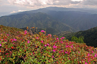 Clingman's Dome From Cliff Top Art Print by Alan Lenk