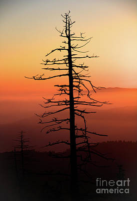 Photograph - Clingman's Dome Sunrise by Douglas Stucky