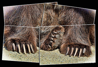 Photograph - Clip Them Claws II by Jim Fitzpatrick