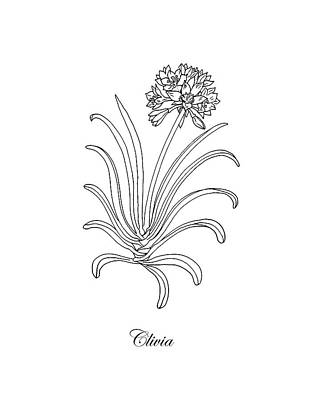 Drawing - Clivia Flower Botanical Drawing by Irina Sztukowski