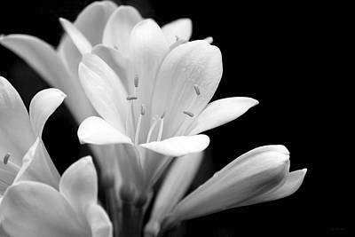 Clivia Flowers Black And White Art Print