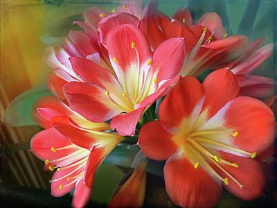 Clivia Flowers Photograph - Clivia by Lorraine Baum
