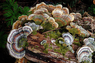 Bracket Fungus Photograph - Close By Nature by Bob Christopher
