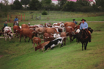 Photograph - Close Cattle Call by Toni Hopper