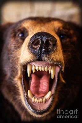 Hump Photograph - Close Encounter Bear by Edward Fielding